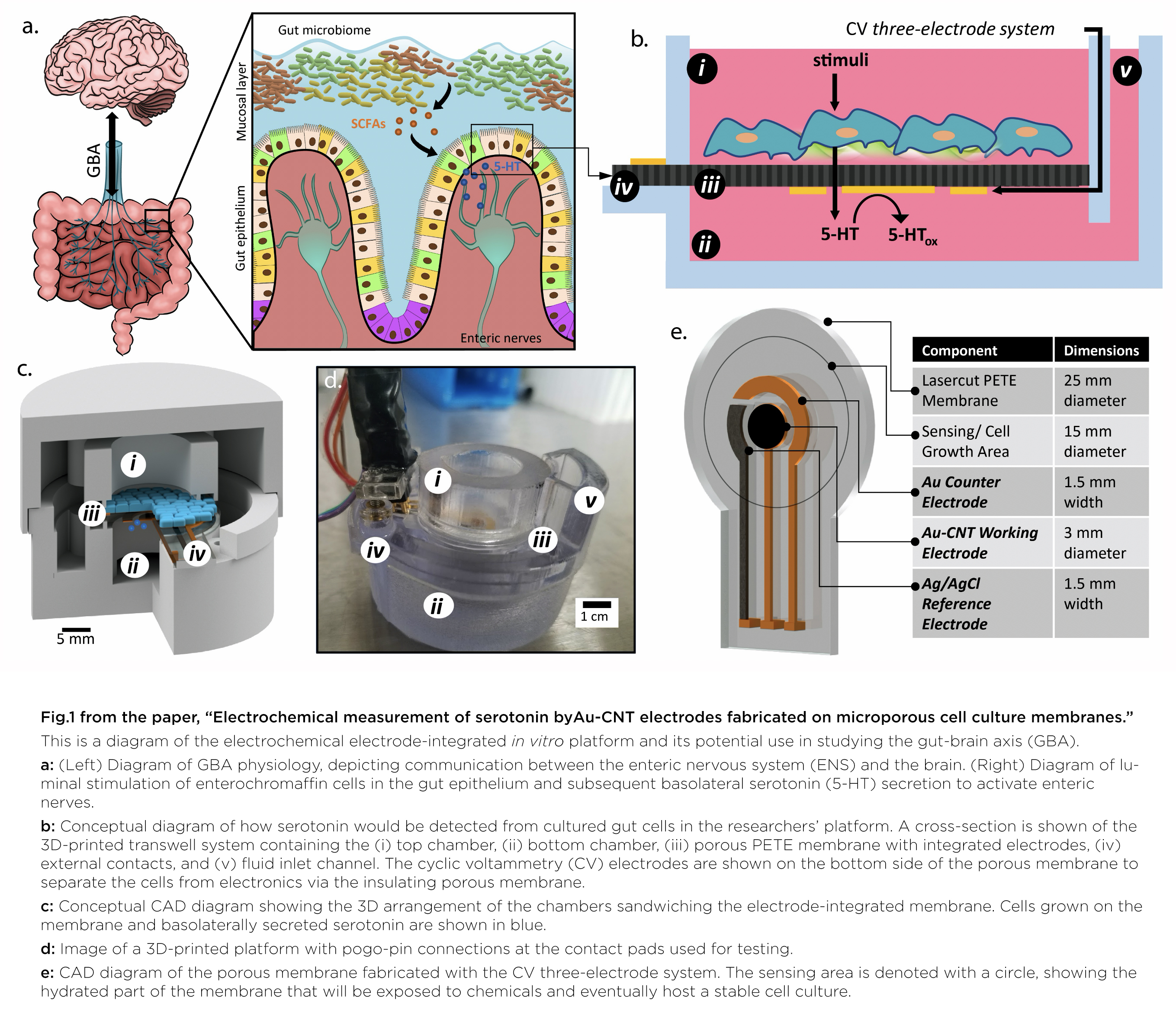 Diagram of the platform and its potential use in studying the gut-brain axis.